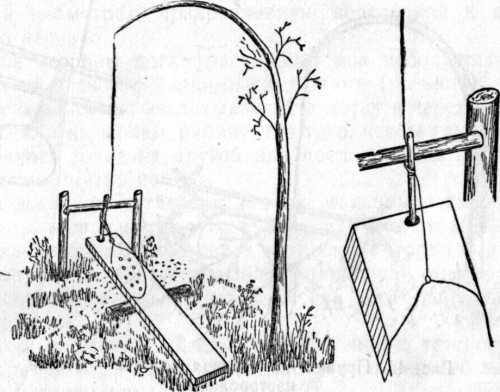 когтедралка: свойства, использование, изготовление