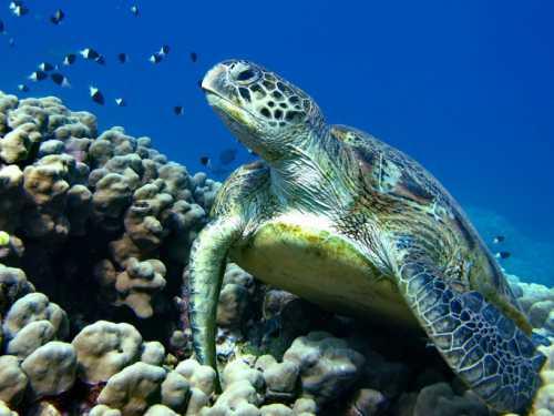 черепаха застряла на камне кто бы мог подумать, кто ей придет на помощь